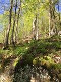 De bomen zijn dunner Royalty-vrije Stock Afbeeldingen
