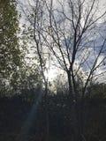 de bomen zijn onze vrienden stock afbeelding