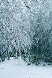De bomenachtergrond van de winter royalty-vrije stock afbeelding