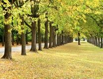 De bomenlijn van de herfst in een park Stock Afbeeldingen