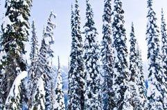 De bomensneeuw van de winter stock afbeelding