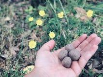 De Bommen van het Wildflowerzaad royalty-vrije stock foto
