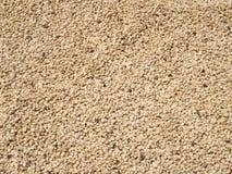 De bonen die van de koffie in de zon drogen Royalty-vrije Stock Afbeeldingen