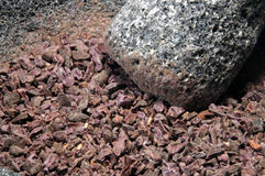 De bonen van de cacao royalty-vrije stock foto's