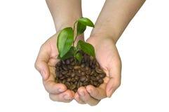 De bonen van de koffie in de handen Royalty-vrije Stock Afbeeldingen