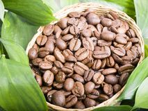 De bonen van de koffie en bladeren Stock Fotografie