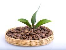 De bonen van de koffie en bladeren Royalty-vrije Stock Afbeelding