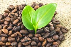 De bonen van de koffie en bladeren Stock Foto