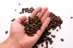 De bonen van de koffie op een palm Stock Foto