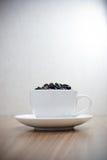 De bonen van de koffie in witte kop Royalty-vrije Stock Foto's