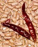 De bonen van de nier en rode koel Stock Fotografie