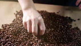 De bonen van de koffie Handen verspreide koffiebonen De bonen van de de aanrakingskoffie van vrouwen` s handen Kwaliteit van korr stock footage