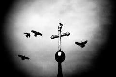 De boodschappers van dood - storm vogels Stock Fotografie