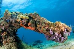 De Boog van het koraal Royalty-vrije Stock Afbeeldingen
