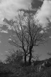 De boom - 1 Stock Afbeeldingen