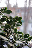 De boom in afwachting van de lente Stock Foto