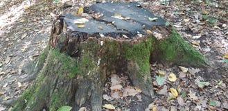 De boom is behandeld met mos royalty-vrije stock fotografie