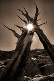 De boom behandelt Stock Foto