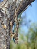 De boom beklimt Stock Foto's