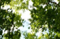 De boom bekroont achtergrond Stock Afbeelding