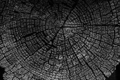 De boom belt oude doorstane houten textuur met de dwarsdoorsnede van stock foto