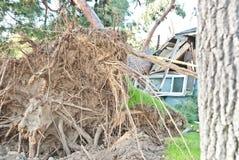 De boom beschadigt Huis Royalty-vrije Stock Fotografie