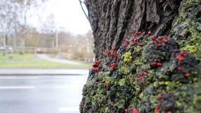 De boom bij de lente met het kleine groeien vertakt zich naast straat Stock Afbeeldingen