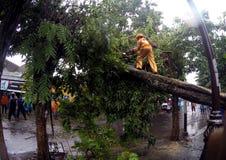 De boom collapssed Royalty-vrije Stock Afbeeldingen