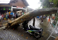 De boom collapssed Stock Afbeeldingen