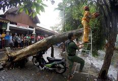 De boom collapssed Royalty-vrije Stock Afbeelding