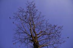 De boom in de blauwe hemel Royalty-vrije Stock Afbeeldingen