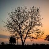 De boom in de zonsondergang royalty-vrije stock fotografie