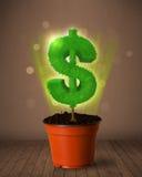 De boom die van het dollarteken uit bloempot komen Stock Afbeelding