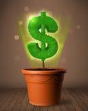 De boom die van het dollarteken uit bloempot komen Royalty-vrije Stock Fotografie