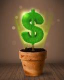De boom die van het dollarteken uit bloempot komen Royalty-vrije Stock Afbeelding