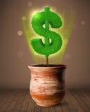 De boom die van het dollarteken uit bloempot komen Royalty-vrije Stock Foto's