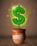 De boom die van het dollarteken uit bloempot komen Royalty-vrije Stock Foto