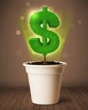 De boom die van het dollarteken uit bloempot komen Stock Foto's