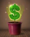 De boom die van het dollarteken uit bloempot komen Stock Fotografie