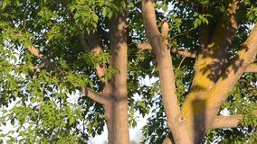 De boom door de zon wordt aangestoken die stock video