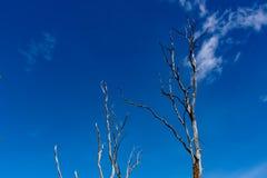 De boom droge doden en de blauwe hemel royalty-vrije stock afbeelding