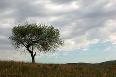 De boom in een weide Stock Foto