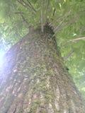 de boom en burk koelt Stock Foto's