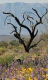 De boom en de bloemen van Ironwood Stock Afbeeldingen