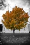De boom en de kerk van de herfst Stock Afbeeldingen