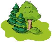 De boom en de sparren van de lente Royalty-vrije Stock Fotografie