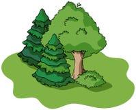 De boom en de sparren van de zomer Stock Fotografie