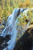 De boom en de waterval van de herfst stock afbeeldingen