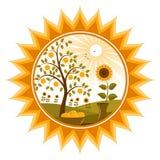 De boom en de zonnebloemen van de appel in zon Royalty-vrije Stock Afbeeldingen