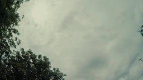 De boom en de hemel drijven aard, reis, boom, groen blauw, Californië, hollywood, natura stock video